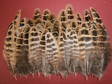 """100 Hen Pheasant Wing Hackle Feathers 2"""" - 4"""" - Crafting feathers"""