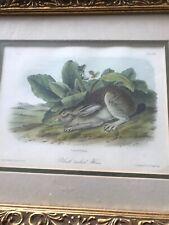 Audubon 1st Editiin Octavo Black Tailed Hare