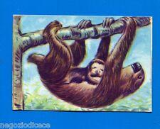 ANIMALI - Lampo 1964 - Figurina-Sticker n. 174 - POLTRONE -New