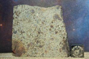 NWA 6080 LL4 Chondrite Meteorite 41 gram part slice with chondrules and metal