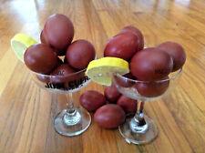 10 Black Copper Marans Hatching Eggs