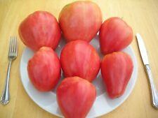 Pink Honey- Rozovyi Myod- Tomato Seeds- Organic- 35+ 2020 Seeds