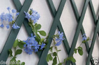 Green Expanding Plastic Garden Trellis 180 X 40cm 1.8m each PVC Trellis 6ftx1.3f