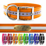 """21"""" Hunting Dog Name Collar Strap Heavy Duty D Ring 1 1/2"""" Wide Reflective"""