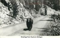 Gaylord Michigan~Bear Out for a Stroll~Highway~1940s Real Photo Postcard~RPPC