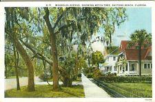 Daytona Beach Fl The Witch Tree on Magnolia Avenue 1937