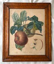 Apple Print Superb Early Bird's Eye Figured Maple Veneer Picture Frame Mid 1800s