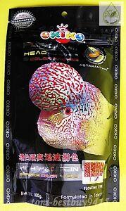 100 g. Best Okiko Platinum Flowerhorn Cichlid Fish Head Huncher Color Faster