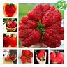 Giant Strawberry Seeds Bonsais Giant Red Strawberry Organic Berry Garden 200 Pcs