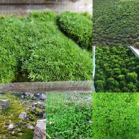 Natural Micro Landscape Green Live Moss Plant Aquarium Fish Tank Landscape Decor