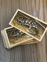 Wildlife In Danger Brooke Bond Tea Vintage Cards 1970