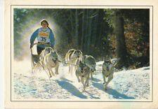Polarhund * Schlittenhund * Husky * Malamute *  Dog  * Postkarte  *  Postcard 2