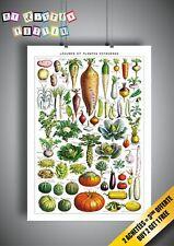 affiche Legumes et Plantes Potageres A3