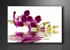 Images sur toile sur cadre 80 x 60 cm fleur orchidée pret a accrocher 4132