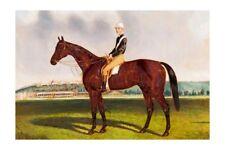 COMMOTION  1882-4 Victorian racehorse champion modern Digital Art Postcard