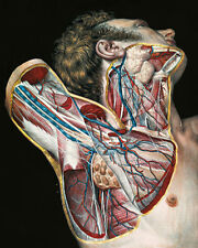 Vintage Medical Doctor Anatomy Surgery Illustration Real Canvas Art Print New
