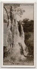 Termite White Ant Termes bellicosus Hill Rhodesia Africa 1930s Trade Ad Card