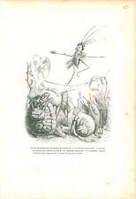 Limaçons Tortue Danseuse Criquet Trompette  ANTHROPOMORPHISME 1842 GRAVURE PRINT