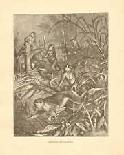 Green Monkeys, by Specht, Zoology, Vintage, 1885 Antique Art Print.