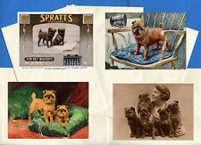 BRUSSELS GRIFFON PACK OF 4 VINTAGE STYLE DOG PRINT GREETINGS NOTE CARDS #3