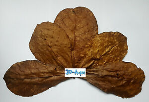 Dried Aquarium Leaves, Catappa, Guava, Mulberry, Teak, Banana, Amaranth, Cassava