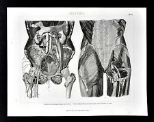 1874 Bilder Anatomical Print - Pelvis Hips Buttocks Thigh Muscles Human Anatomy