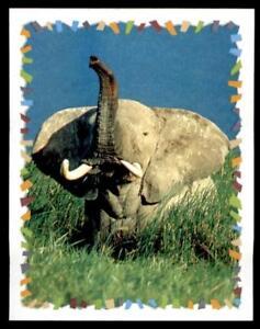 Panini - Disney Animal Sticker 2000 No. 17