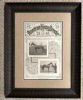 Original American Horse Breeder Circa 1901 Cover Custom Framed