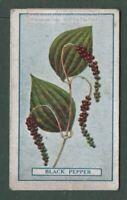 Black Pepper Food Spice Herb Piper nigrum 100  Y/O Trade Ad Card G