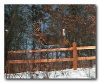 WHITE TAILED DEER GLOSSY POSTER PICTURE PHOTO PRINT virginia whitetail 4981