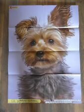 Tierposter Hund Yorkshire Terrier Kalendarius 2018-06 Poster