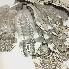 authentic Monocled Cobra SNAKE SKIN HIDE tanned Snakeskin leather without Hole