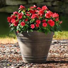 50 pcs Vinca rosea Rosy Periwinkle Catharanthus roseus flower seeds