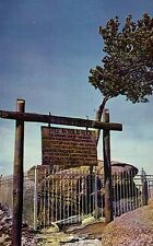 Tree in Solid Rock Lincoln Highway 30 Laramie to Cheyenne Wyoming WY -- Postcard