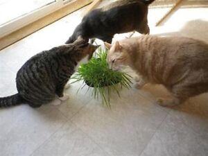 CAT OAT GRASS SEED*2oz*Cat TREAT*Digestive Health*2 Full Ounces*FREE SHIPPING!!