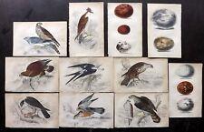 William Jardine C1840 Lot of 11 Hand Col Birds & Bird Egg Prints. Book Plates