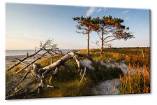 Leinwand Bild Leinwand Bild Ostsee Strand Dünen Bäume Darß Abenstimmung Ruhe Url