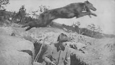 French Army Courier Dog Jumping Over Trench World War 1 7x4 Inch Reprint Photo