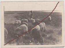 oasi della berca colonie libia pecore al pascolo
