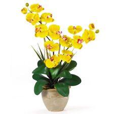 New listing Bulk Seed 100 Yellow Phalaenopsis Seed Bonsai Bonsai Flower Seed S076