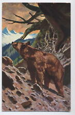 German? card with Bear in the Wild on mountain side - K & B D Serie 3201