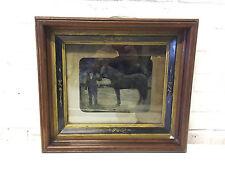 Antique Silver Gelatin Tintype Photo Photograph of Man & Horse