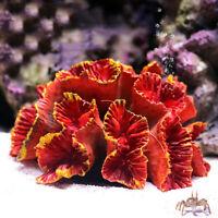 Resin Artificial Coral Reef Aquarium Decoration Fish Tank Landscape Ornaments