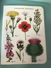 Cavallini Papers And Co. 2 Wildflower Specimen Notebooks