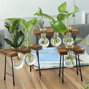 Vintage Bonsai Glass Vase Hydroponic Plant Vases Wooden Frame Flower Pot