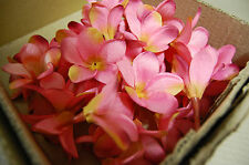 BULK BUY BOX 144 PINK FRANGIPANI HEADS< PARTIES, WEDDING BOUQUETS,TABLE SCATTERS