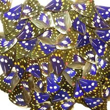 PURPLE 1000 pcs REAL BUTTERFLY wing material ooak fairy DIY artwork