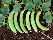 ARMANIAN CUCUMBER 2 VARIETY 100 FRESH SEEDS (NON GMO - HEIRLOOM)