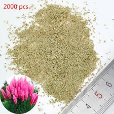 500~2000 Pampas Ornamental Seeds Bonsai Garden Plant Cortaderia Selloana Grass