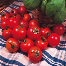 Tomato - Gardeners Delight - 50 seeds